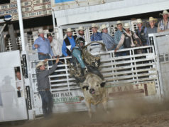 bull-riding-sage-kimzey-abilene-rodeo-2018-by-fly-thomas-8-1-18